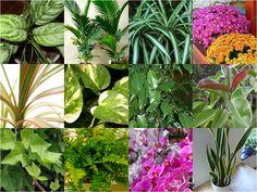 Utilize plantas purificadoras para melhorar o ar no seu ambiente - um dos fatores básicos e principais no Feng Shui. Saiba mais >>> http://www.dhonella.com.br/feng-shui/feng-shui/1018-dicas-de-feng-shui-para-atrair-saude-e-bem-estar