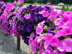 Big baskets of petunias on a fence...great idea to hide the ugly wooden fence behind the north flower garden
