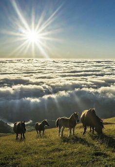 so beautiful landscape - horse clouds sun. All The Pretty Horses, Beautiful Horses, Animals Beautiful, Cute Animals, Majestic Horse, Mundo Animal, Horse Love, Wild Horses, Black Horses
