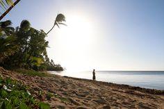 Fidschi Bravebird