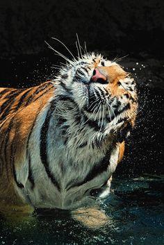 Dehydration | Ryu Jong soung