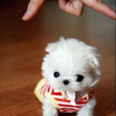 Aww! Want one!!! (: