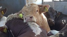 Call on 24 EU Agriculture Ministers to support changes to the law on animal welfare during transport.