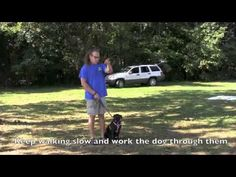 No more pulling dog fixed in 5 minutes - Solid K9 Training - YouTube