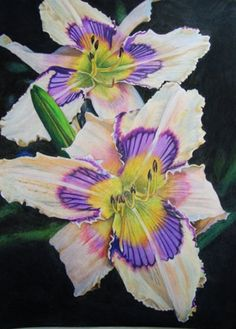 Colored Pencil Daylily, not the name of a daylily, but a realistic art work!