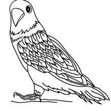 Nightingale Paper Art Pinterest Nightingale and Bird template