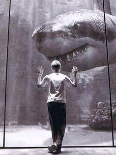 shark, ok that's just scary! Megalodon, Hai Tattoo, Animals Beautiful, Cute Animals, Shark Pictures, Shark Bait, Ocean Creatures, Mundo Animal, Sea Monsters