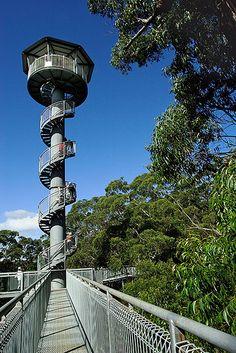 """Illawarra Fly Tree Top Walk - Illawarra's bird's-eye view"" by Darren Stones Wollongong Australia, Rock Pools, Tree Tops, Places Ive Been, Things To Do, Road Trip, Walking, Bird, Adventure"