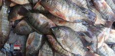 ننشر أسعار بيع الأسماك والخضروات والفاكهة  في سوق العبور.. ..والبلطي بـ33 جنيها