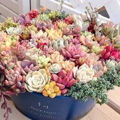 200 Rare Mix Lithops flores Living Stones Succulent Cactus Organic Garden Bulk plante,bonsai plantas for indoor succulent plants