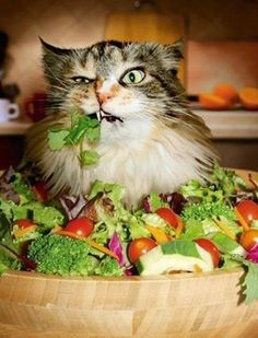 A robust salad | 25 Things Cats Are Secretly Obsessed With... That cat is not real...