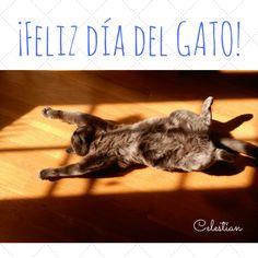¡Feliz día internacional del gato! #diadelgato #gatos #gato #cat #pinterest