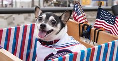 Watch Adorable Dog Discuss Fireworks Fears in 'Colbert' PSA http://www.rollingstone.com/tv/news/watch-adorable-dog-discuss-fireworks-fears-in-colbert-psa-w490874?utm_campaign=crowdfire&utm_content=crowdfire&utm_medium=social&utm_source=pinterest