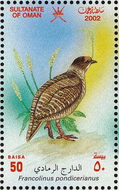 Grey Francolin stamps - mainly images - gallery format