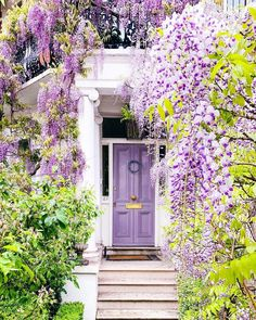 , Wisteria london _ glyzinien london _ glycine londres _ glicina de londres _ wisteria wedding, wisteri There are plenty of things which might as a final point entire a person's garden, such as an oldtime white.