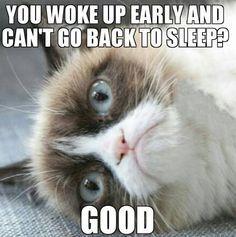 grumpy cat humor - Google Search