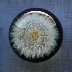 Dandelion Paperweight by SwitchbladeandCookie on Etsy