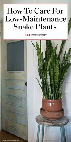 Apothecary Decor, Snake Plant Care, Home Flower Arrangements, Bloom Where Youre Planted, Outdoor Plants, Potted Plants, Garden Planters, Indoor Garden, Green Life