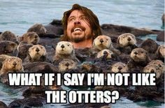 """I Have Seen The Whole Of The Internet: Dave Grohl Is """"Not Like The Otters"""""""