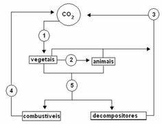 Exercícios sobre ciclo do carbono. Ciclo do carbono - Brasil Escola Floor Plans, Diagram, Study, Education, Math, Science Classroom, School, Brazil, Goal