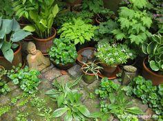 Pflanzen für den Nordbalkon