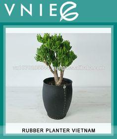 Planteur de caoutchouc VIETNAM-image-Pots à fleurs & jardinières-Id ...