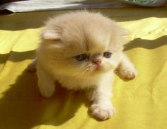 cuteee...
