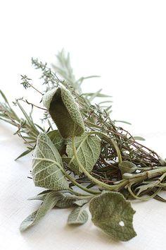 Rosemary, thyme, sage