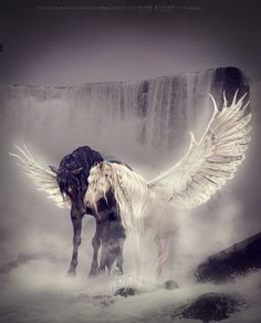 Just Hold On -Colorado Victims Dedication by malrymoo on DeviantArt Unicorn And Fairies, Unicorn Fantasy, Unicorn Horse, Unicorn Art, Mythical Creatures Art, Mythological Creatures, Magical Creatures, Beautiful Horses, Animals Beautiful