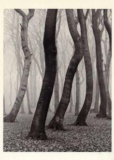 Albert Renger-Patzsch, Forest in Autumn, 1936