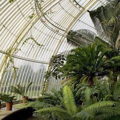 On today's mood board - the Palm House at Kew Gardens #palmhouse