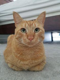 Ginger Loaf