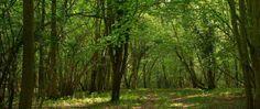 Elvin Crafts restoring neglected woodlands