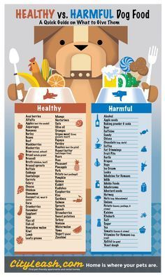 Printable Healthy and Harmful Food for Dogs Poster - CityLeash.com