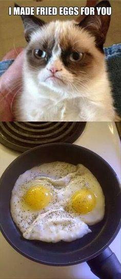 Grumpy cat makes breakfast lol