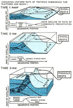 carbonate reef formation