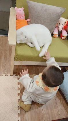 Funny Cute Cats, Cute Baby Cats, Cute Funny Babies, Cute Cat Gif, Cute Little Baby, Cute Funny Animals, Cute Baby Animals, Kittens Cutest, Cats And Kittens