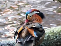 National Geographic Your Shot Jacksonville Zoo, National Geographic Photos, Amazing Photography, Bird, Water, Animals, Gripe Water, Animales, Animaux