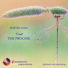 Hold the vision, but trust the process.