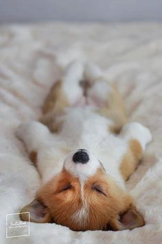 Discover additional relevant information on Look into our internet site. Corgi Funny, Cute Corgi, Corgi Dog, Dog Cat, Animals And Pets, Baby Animals, Funny Animals, Cute Animals, Cute Dog Pictures