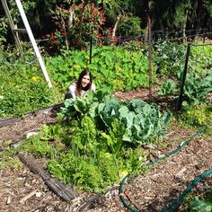 100% in love with Gwinganna's organic veggie patches