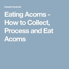 Everything you need to know about eating acorns. When to collect, what kind are best, how to leach out the bitterness, and how to store the acorns. Survival Food, Emergency Preparedness, Eating Acorns, To Collect, Outdoor Crafts, Best Blogs, Bitterness, Food And Drink, Cooking