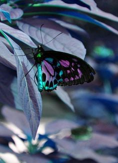 beautiful colors / shades of purple and turquoise / butterflies