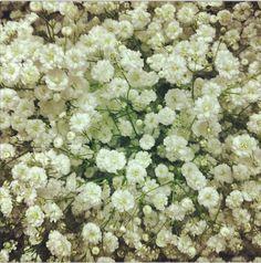 Le gypsophile perfecta est une très jolie variété de gypso...c'est la tendance de cette année #fleurs #mariage #francefleurs