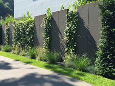 Sichtschutzelemente aus Basaltlava von Rheingrün Gartengestaltung. Efeu Bepflanzung. Gestaltet von Rheingrün