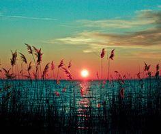 sun set with reeds