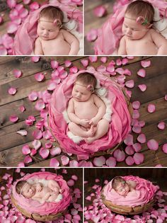 Newborn Professional Photos Seattle pink rose petals