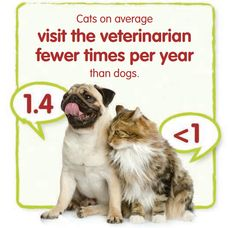 Cats on average visit the veterinarian fewer times per year than dogs. Click here to learn why regular visits are critical to your cat's health.