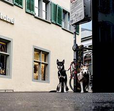 In The City of Lucerne . Danke 🙏 für's warten bis die richtige Blende am Objektiv eingestellt ist. . .  #lucerne #lucerna #lucernecity #luzern #switzerland #swiss #lozärn #suisse #cityscape #mountains #travel #lucerne_switzerland #lakelucerne #visitlucerne #citywalkLucerne #oldTownLucerne #MeinLuzern #MyLucerne #LakeLucerneRegion  #photosDieGeschichtenErzählen #nikoneurope #nikonswitzerland #nikonphotography #nikonZ7 #inLOVEwithSWITZERLAND  #photography  #루체른 #스위스 瑞士盧森luzern 瑞士… Lucerne Switzerland, Nikon Photography, Mountain S, Old Town, Europe, City, Photos, Travel, Old City