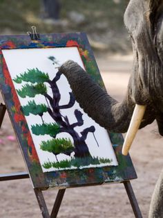 Elephants painting in Chiang Mai, Thailand.  Want to go!